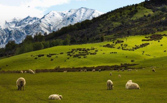 Отдельный факт: Новая Зеландия