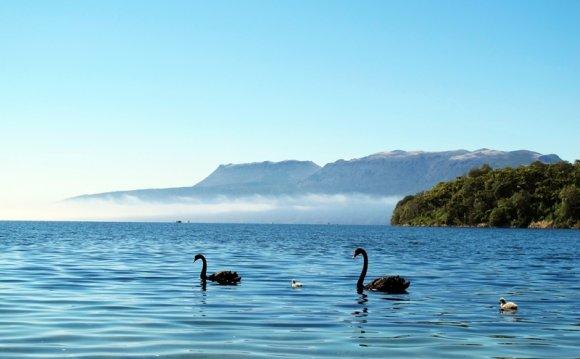 жалуют Новую Зеландию