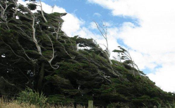 Прогнувшийся лес в Новой